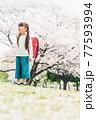 桜と小学校新一年生 77593994