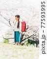 桜と小学校新一年生 77593995