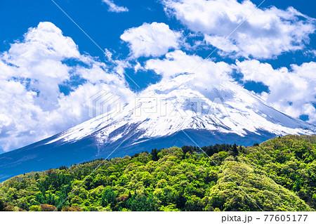 《山梨県》白雲の富士山・初夏の河口湖の眺め 77605177