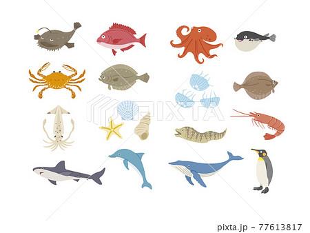 海の生き物のイラストセット 77613817