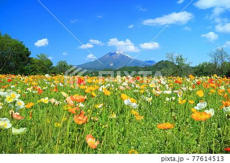 【鳥取県】晴天下のとっとり花回廊(大山と花の丘) 77614513
