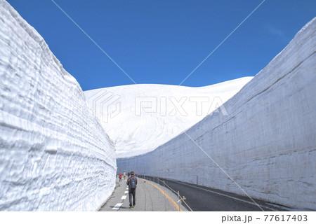 【富山県】雪の大谷。立山黒部アルペンルート。雪の大谷ウォーク。 77617403