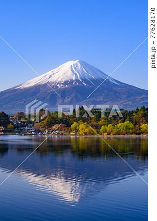 (山梨県)早朝の逆さ富士と河口湖・快晴の空 77628170