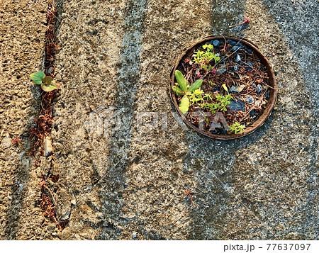 丸いものの中に生える雑草たち/The plants 77637097