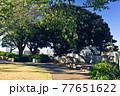 横浜・イタリア山庭園 77651622