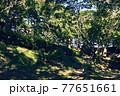 横浜・山手公園 77651661