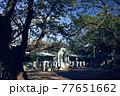 横浜・山手公園 77651662