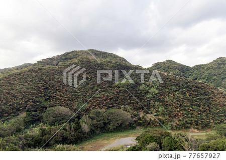 奄美大島のソテツ群生地 安木屋場展望所からの眺め 77657927