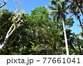 熱帯地域 77661041
