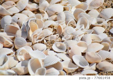海岸に打ち上がったたくさんの貝殻 77661458