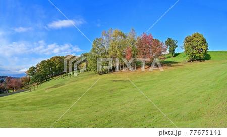 青空バックに富良野の公園で見た晩秋の紅葉情景@北海道 77675141