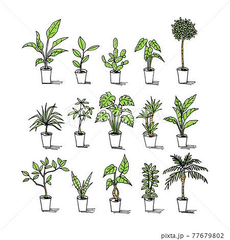 色々な観葉植物のイラストセット 77679802
