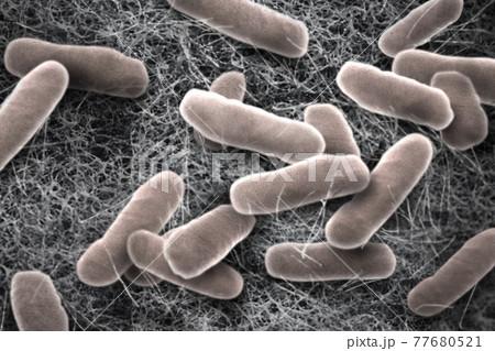 サルモネラ菌を顕微鏡で見たイメージ 77680521