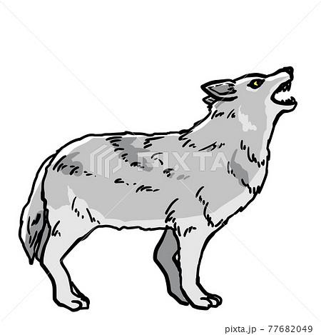 吠えている狼のイラスト 77682049