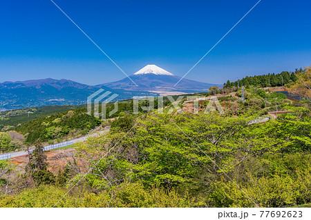 (静岡県)新緑の山中城址公園、富士山 77692623