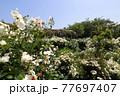 <神奈川県>横浜イングリッシュガーデン 77697407