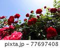 <神奈川県>横浜イングリッシュガーデン 77697408
