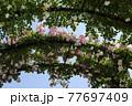 <神奈川県>横浜イングリッシュガーデン 77697409