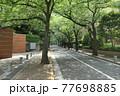 桜並木のある木陰の散歩道 77698885