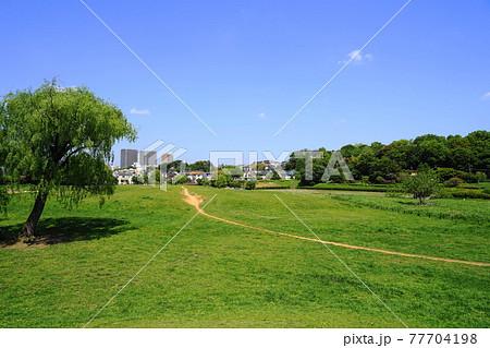 4月 小金井228若葉・新緑の野原と国分寺崖線・都立武蔵野公園 77704198