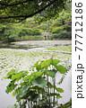 日本 京都 ハス池 77712186