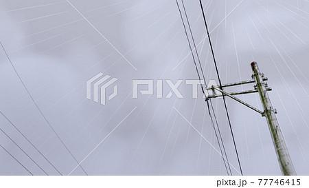 雨と電柱 77746415