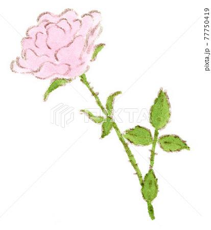 ピンクの薔薇、ミニバラの水彩イラスト 77750419
