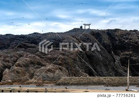 島根県出雲市 日御碕神社の先にあるウミネコの繁殖地の経島 77756261