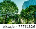 新緑の季節 新宿の街並み 77761326