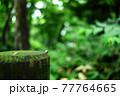 森の中にある苔むした丸太の端を歩くダンゴムシ 77764665