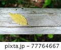 真上から撮った丸太の上に落ちている黄色い落ち葉 77764667