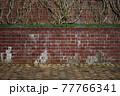 赤レンガの壁を真正面から 77766341