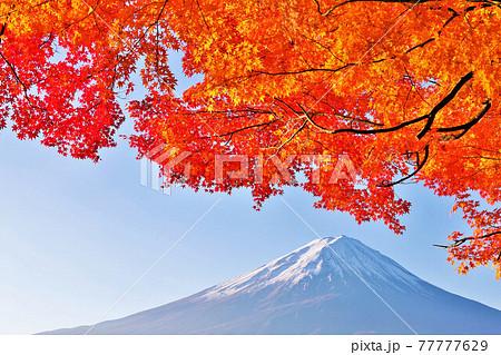 富士山と秋の紅葉 77777629