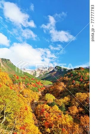 北海道 秋の紅葉風景 77777783