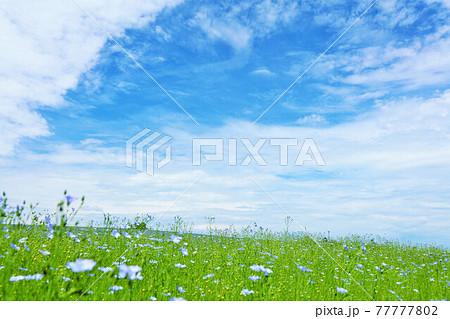 北海道 夏の青空と美瑛の風景 77777802