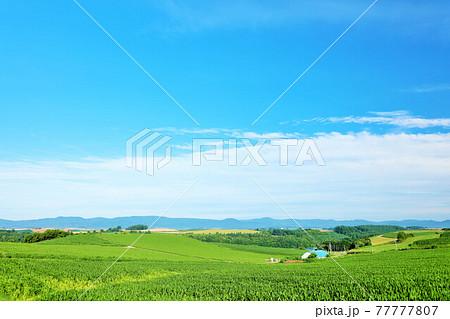 北海道 夏の青空と美瑛の風景 77777807