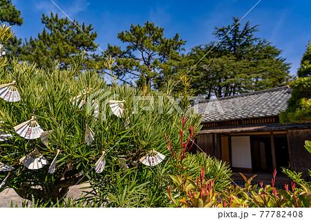山口県萩市 松陰神社内にある木にぶら下げられた扇子型のおみくじ 77782408