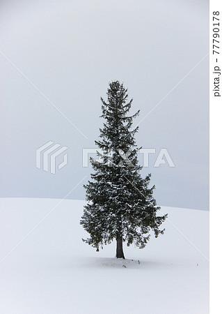 丘に立つ冬木立 77790178