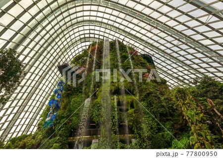 【シンガポール】ガーデンズバイザべイ・クラウドフォレストの滝・人物無し 77800950