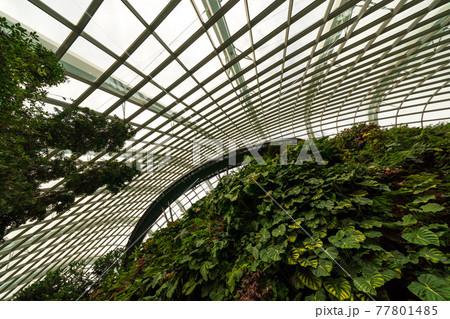 【シンガポール】ガーデンズバイザべイ・クラウドフォレストのオブジェ 77801485