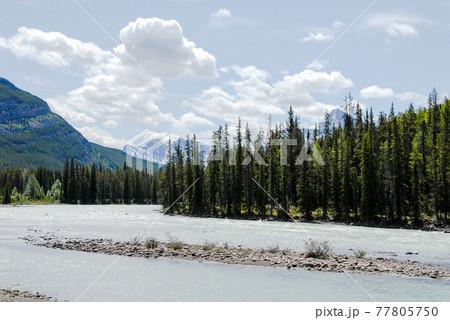 春のカナディアン・ロッキー アサバスカ川と山並み(カナダ) 77805750