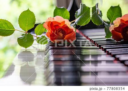 ピアノの鍵盤とオレンジ色バラ 1本 77808354