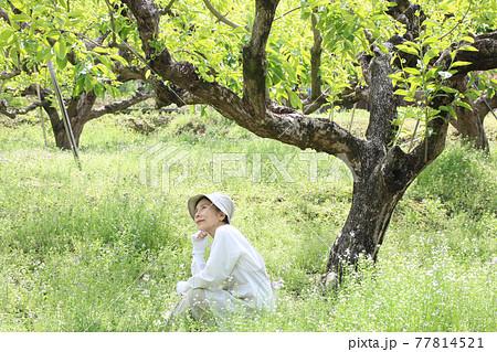 初夏の柿畑の草むらに座って休むシニア女性 77814521