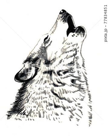水彩画 狼の遠吠え モノクロ 77834851