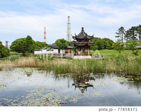 神奈川県横浜市本牧市民公園の上海横浜友好園 77858371