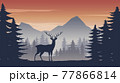 deer standing in the pine jungle on the sunset time 77866814