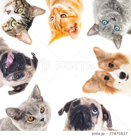 猫ワンチャンたち 77870837