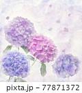 digital painting of hydrangea flowers . 77871372