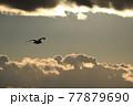 夕暮れの中、空の彼方に飛んでいく鳥 77879690