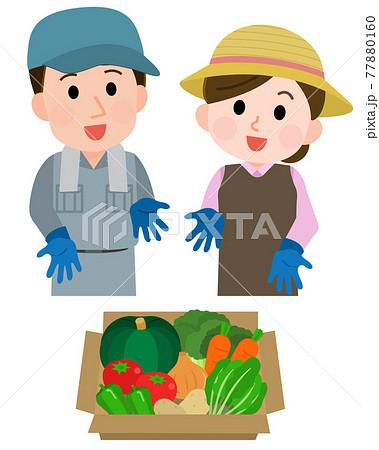 箱詰めした野菜を紹介する野菜農家の夫婦2 イラスト 77880160